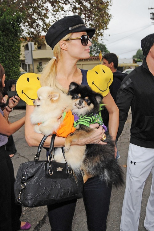 Paris Hilton, wearing a smiley face dress, shops at Trashy Lingerie with her two pooches and boyfriend Cy Waits