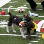 Who Cares About Football when the Puppy Bowl Comes to Arizona?