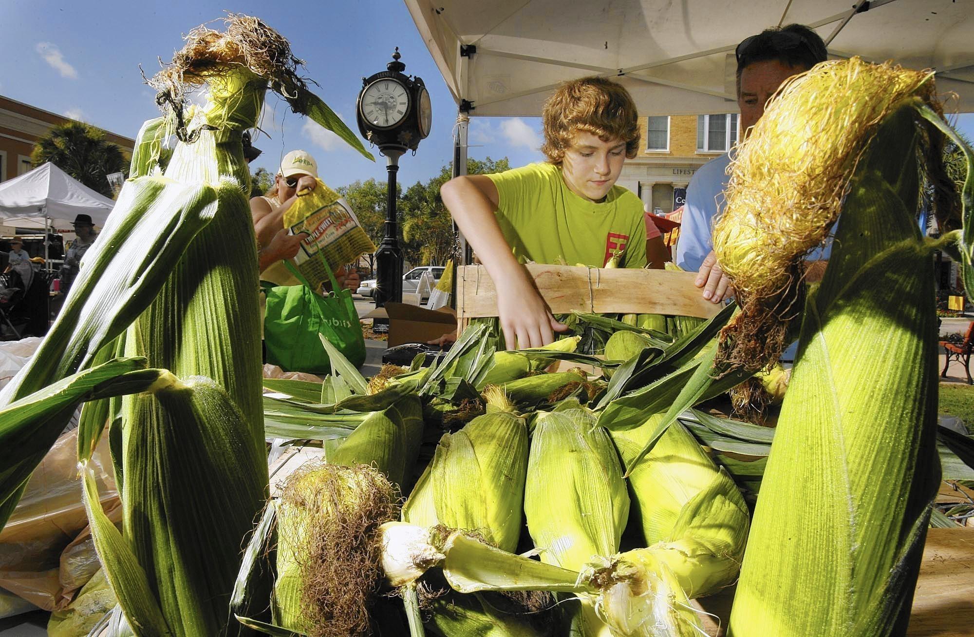 Fun Food Festivals in Florida - Travel Hymns