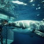 Best Spots For Shark Diving