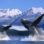 Did You Know These Fun Facts About Alaska?