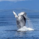 5 Mind-Blowing Facts about Whales That You Didn't Know