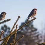 Why So Many Travelers Are Taking Up Bird Spotting