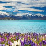Five Reasons to Visit New Zealand in Spring