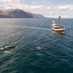 Best Places to Go Whale Watching In Antarctica Cruises